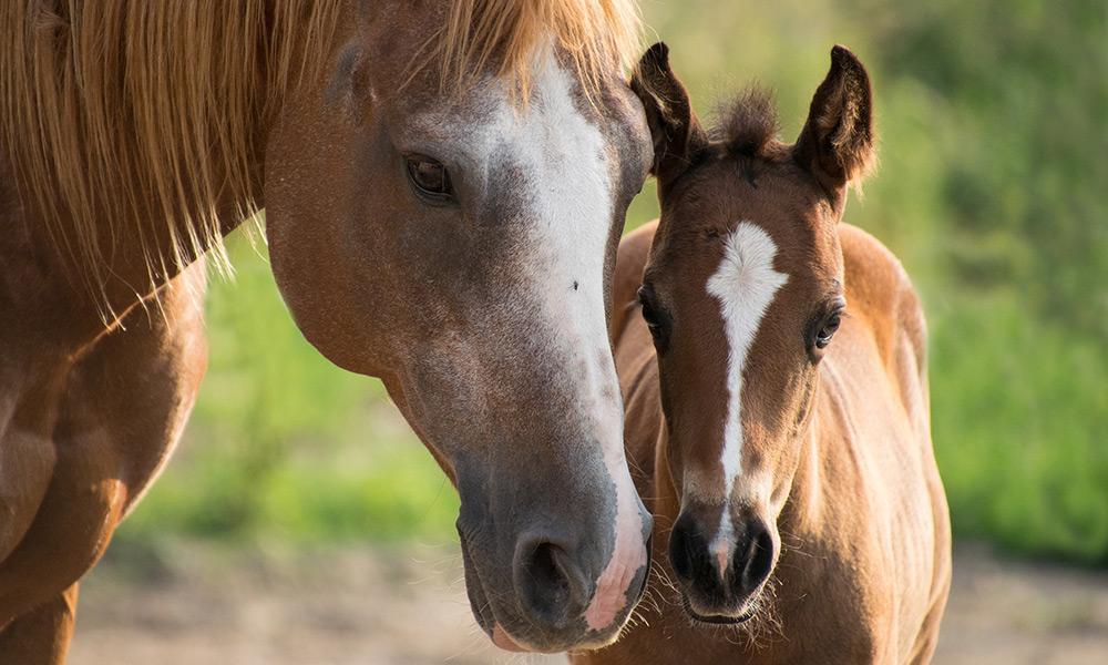 Pferd - © Pixabay