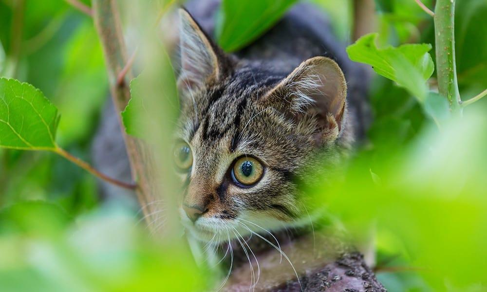 Katze - © Envato Elements