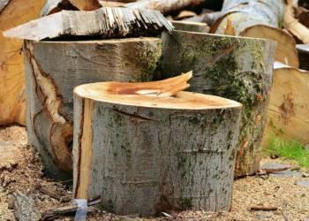 Baum fällen