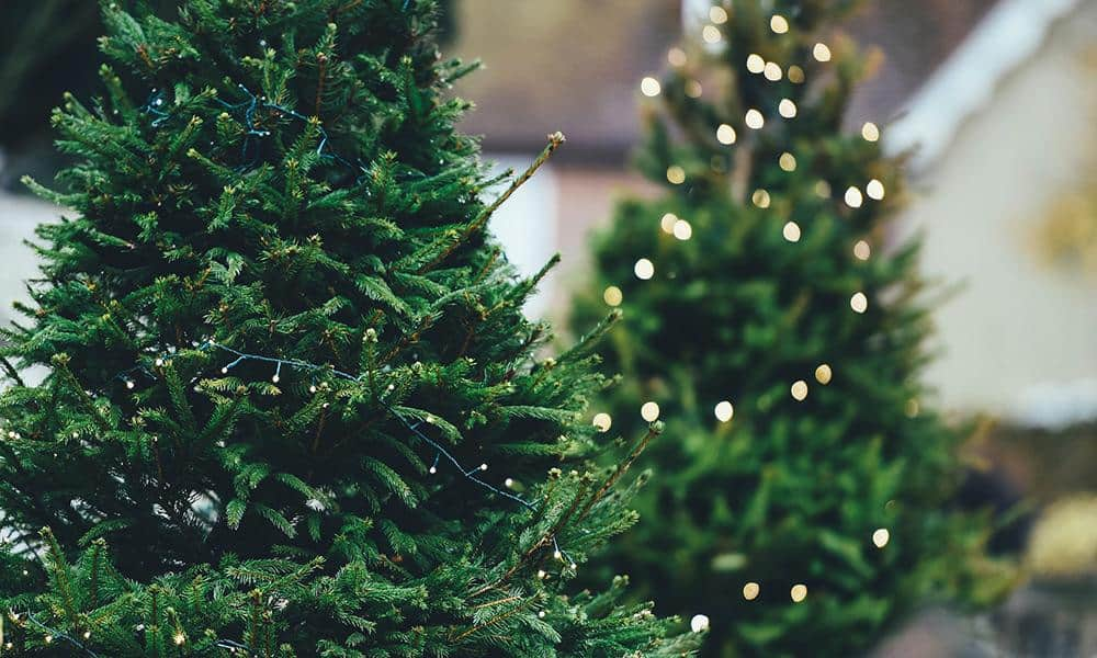Ungeschmückter Weihnachtsbaum mit Beleuchtung
