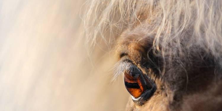 Pony - © Envato Elements