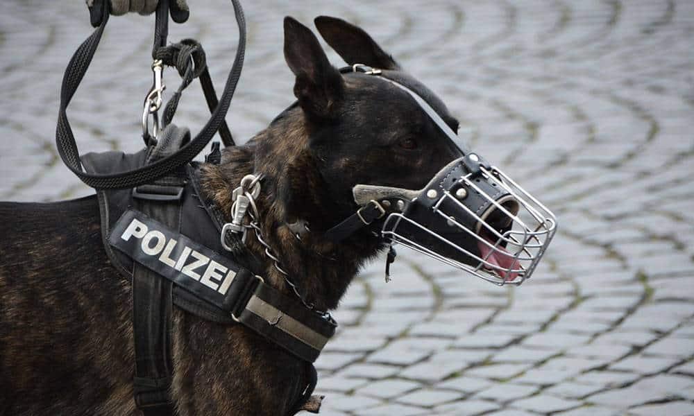 Polizeihund - © Pixabay