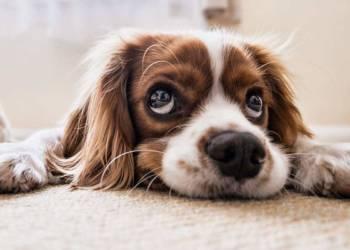 Hund - © Pixabay