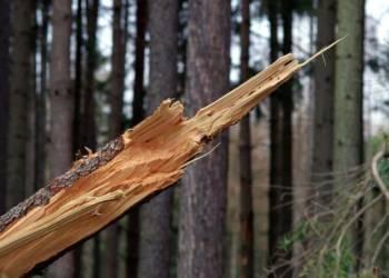 Sturm, Baum