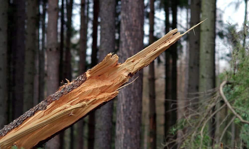 Sturm, Baum - © Pixabay