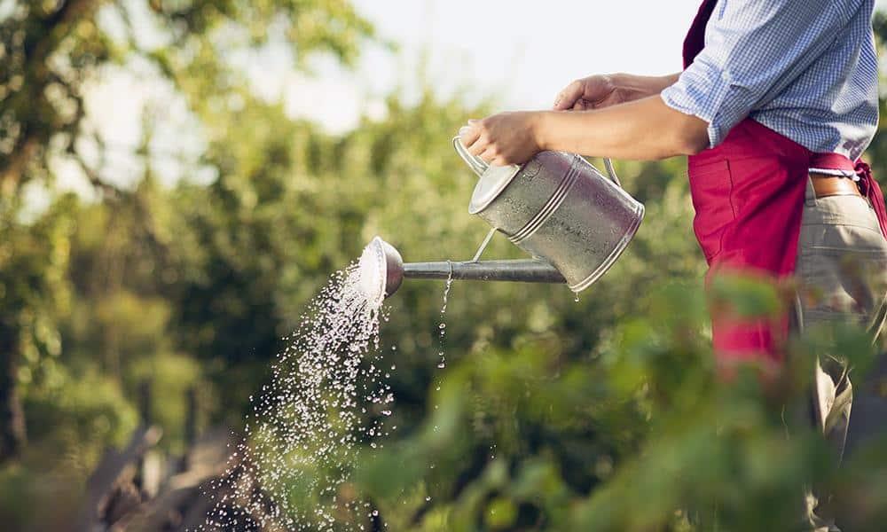 Gartenarbeit - © Envato Elements