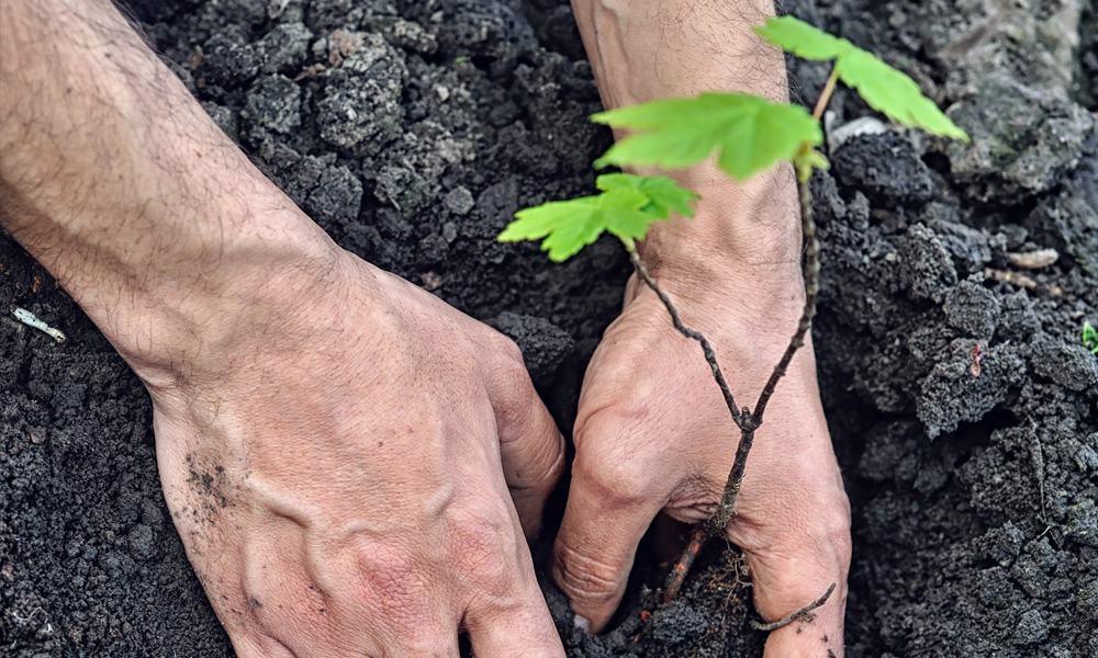 Baum pflanzen - © Envato Elements