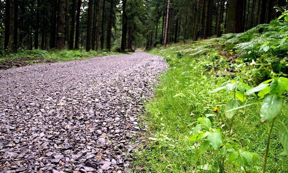 Blick auf einen Teil des Eggewegs in den Forsten des Landesverbandes Lippe. - © Landesverband Lippe