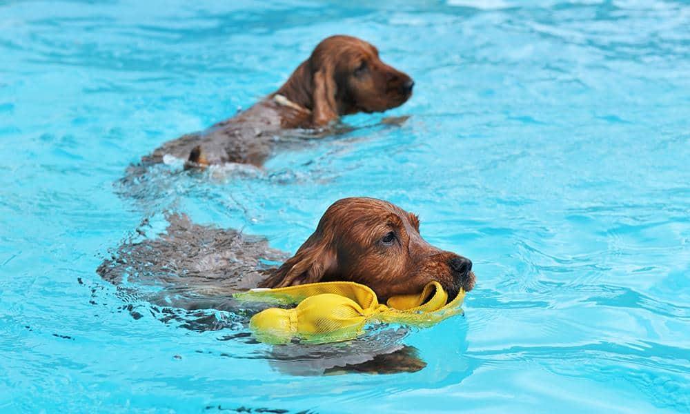 Hundeschwimmen - © Envato Elements