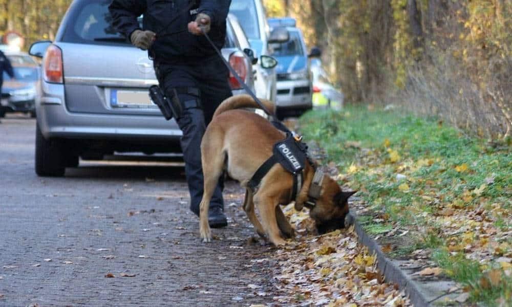 Diensthund Anthrax bei der Arbeit
