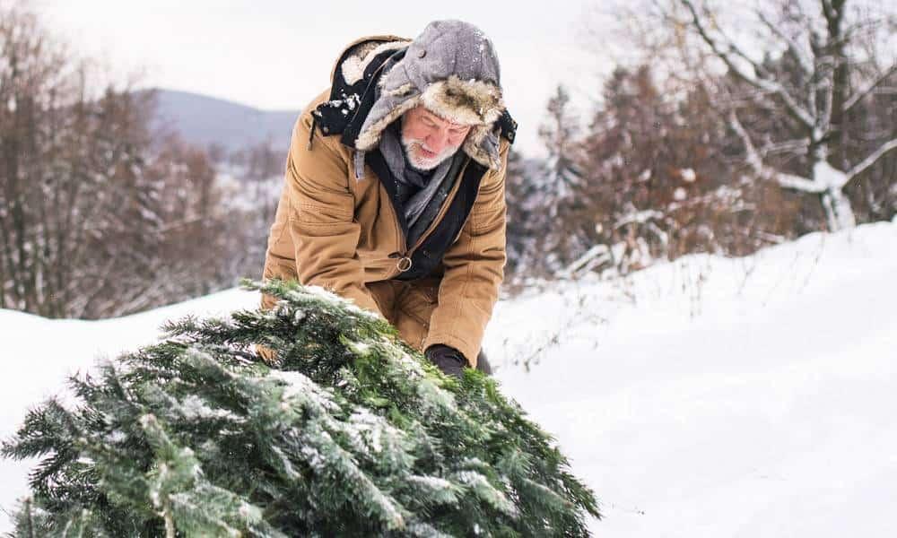 Weihnachtsbaum, Sammlung - © Envato Elements