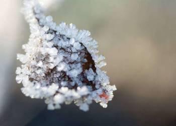 Frost - © Kukon, Bartosz Tyce
