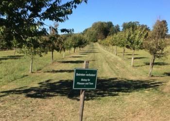 Damit die Obstbäume in der kommenden Saison wieder gut treiben, müssen sie im Herbst oder Winter beschnitten werden. - © NaTourEnergie
