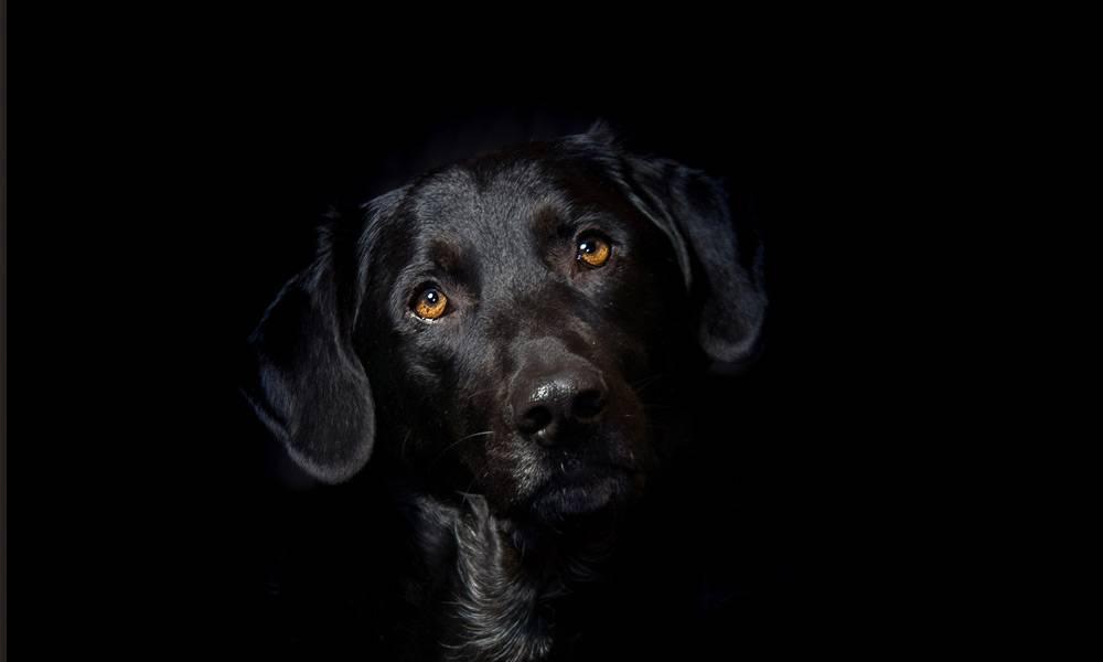 Hund, schwarz - © Pixabay