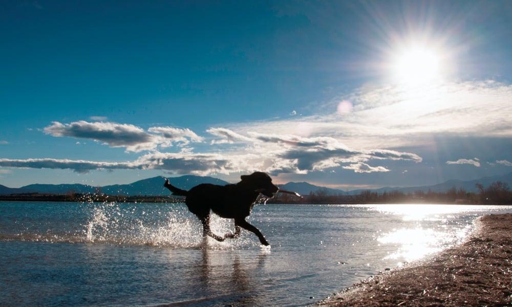 Hund spielt im See