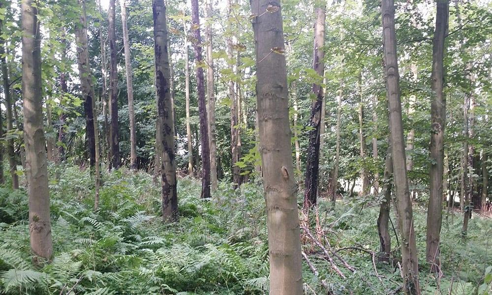 Homberger Wald