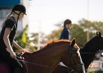 Pferde, Reiter