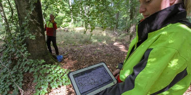 Markierung Totholzbäume