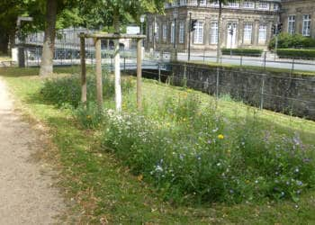 Wildblumen Detmold
