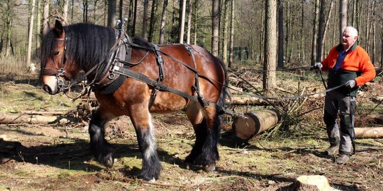 Pferd, Stadtholz