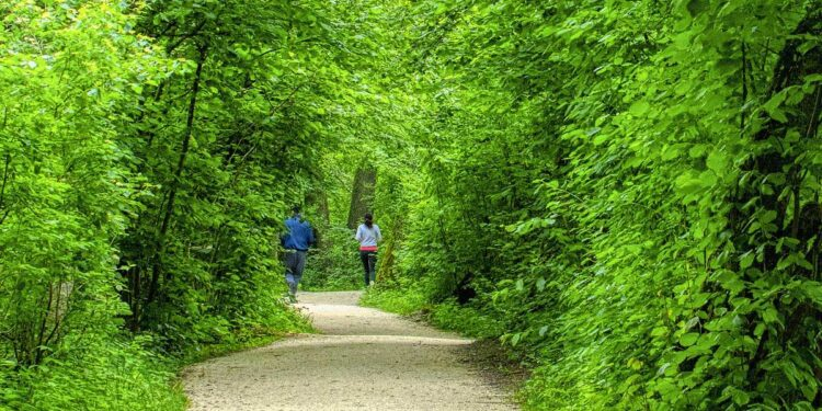 Joggen, Wald