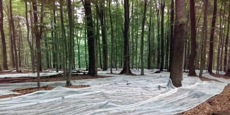 Netze Stadtwald